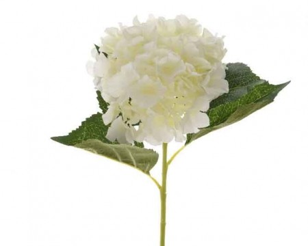 Silkehortensia Off-white